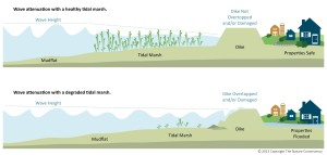 An infographic depicting the role that tidal marshes can play in reducing risk to a levee.