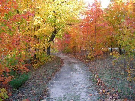 Fall foliage gracing a wooded path. Taken by NOAA/OAR/Great Lakes Environmental Research Lab.
