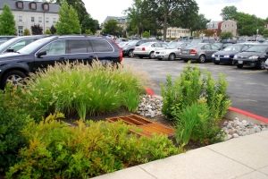 Small rain garden at the Chesapeake Bay Program