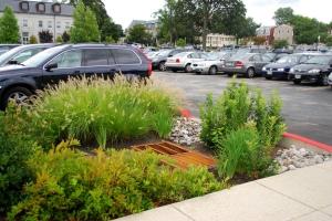 Small rain garden at the Chesapeake Bay Program
