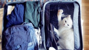 Image of a cat in an open suitcase full of clothes