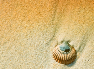 Image of a shell on the sand