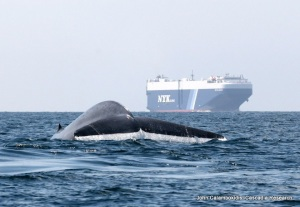 Whale_and_Ship